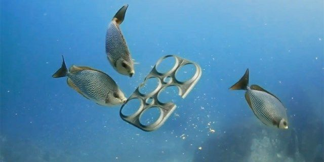 Brewery Creates Edible Six Pack Rings That Feed Rather Than Kill Marine Life Marine Animals Beer Company Beer Packaging