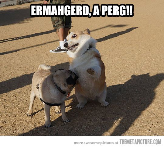This is how I feel when I see a pug! Its great, because I love corgis too! :D
