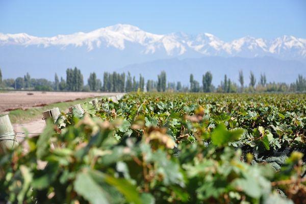Vinhas Mendoza  O artigo no blog de viagens e todas as fotos aqui: http://bit.ly/1FlzbYK  Mendoza Wine Region  The article on the travel blog with all photos here: http://bit.ly/1FlzbYK
