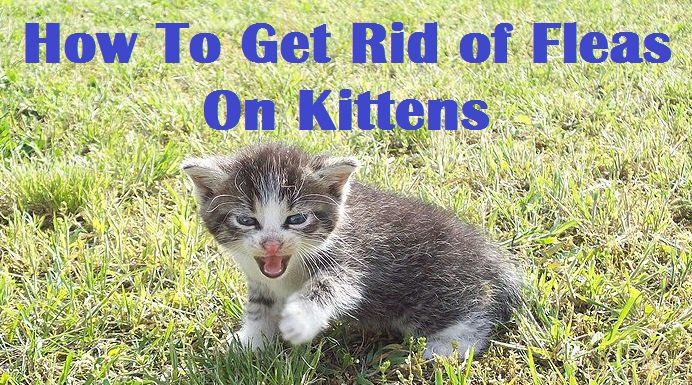 This Care Com Article Tells All About Caring For A Cat From When It Is Newborn To 72 Weeks Old Kittens Care Kitten Care S Kitten Care Kittens Newborn Kittens