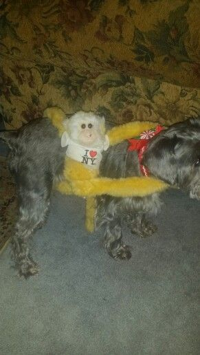 Coco has a passenger!