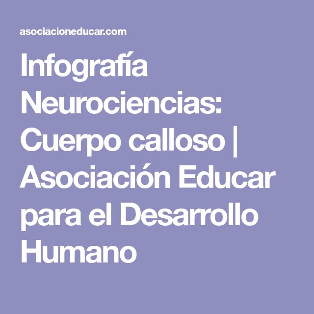Infografía Neurociencias: Cuerpo calloso | Asociación Educar para el ...