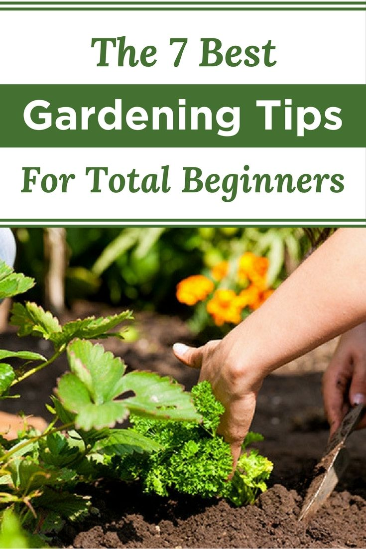 If you're a total gardening novice, you have to check out these tips for beginners. They'll help make your first gardening project a success!