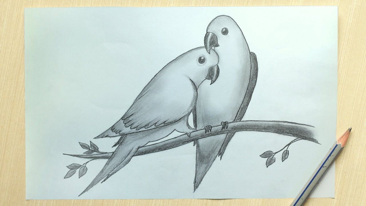 Love Bird Drawing How To Draw Two Parrots In Love Love Bird Parrot D Pencil Drawing Images Bird Pencil Drawing Bird Drawings