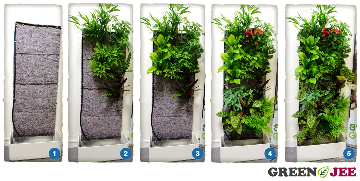 decoration mur vegetal exterieur
