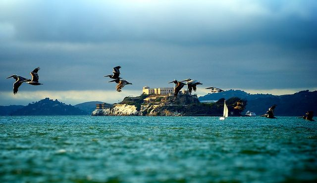 vista dos pelicanos de alcatraz
