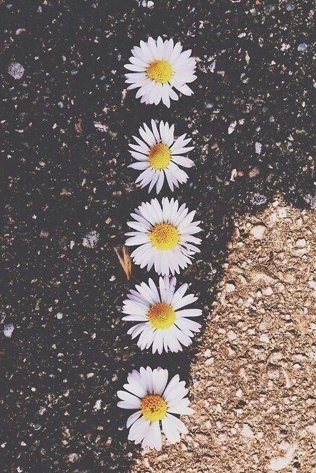 Background Cool Cute Daisy Emoji Floral Flower Galaxy