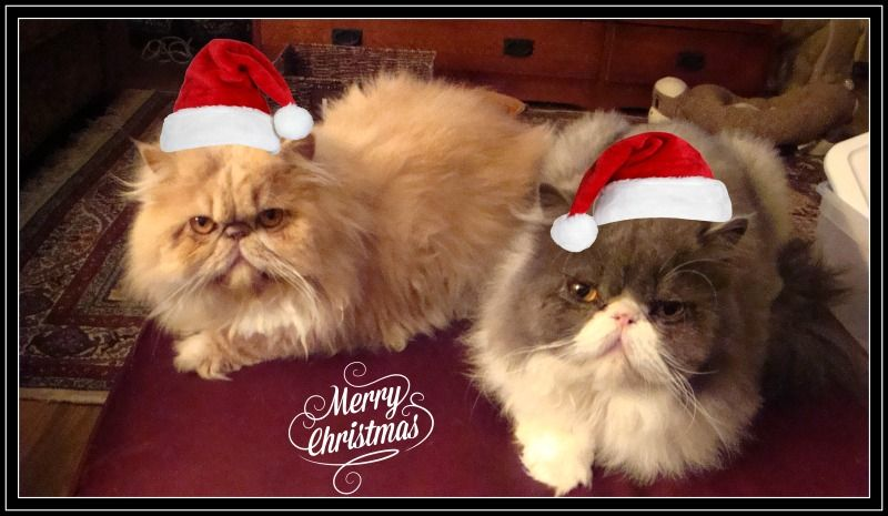 Holiday Cheer from Butch & Cassidy