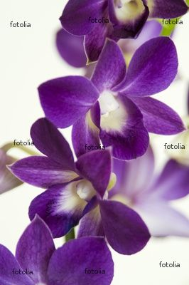 Wedding Madness And Other Such Chaos Oodles Of Orchids Purple Orchids Dendrobium Orchids Wedding Orchids