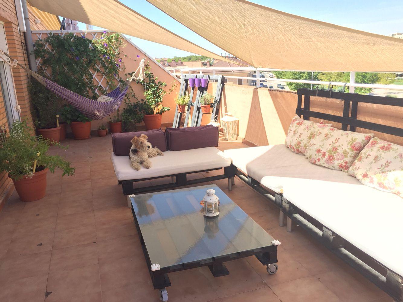 Mi terraza con palets muy cuca y mi fox terrier