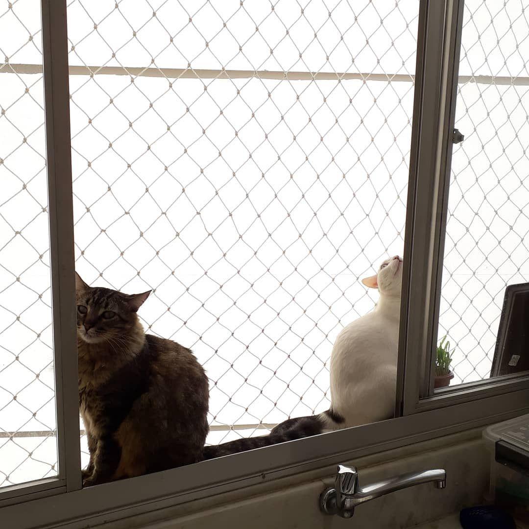 Catlovers Schürzen | Redbubble