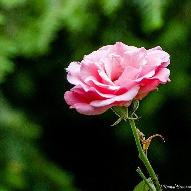 #Repost @kamalbennani  #macro #landscape #nature #flowers #flower #parisian #ig_paris #parisien #sky #tree #mothernature #igersparis #beauty #instagood #instadaily #bestoftheday #igdaily #igersfrance #igers_paris #jpkcwelcometomyworld