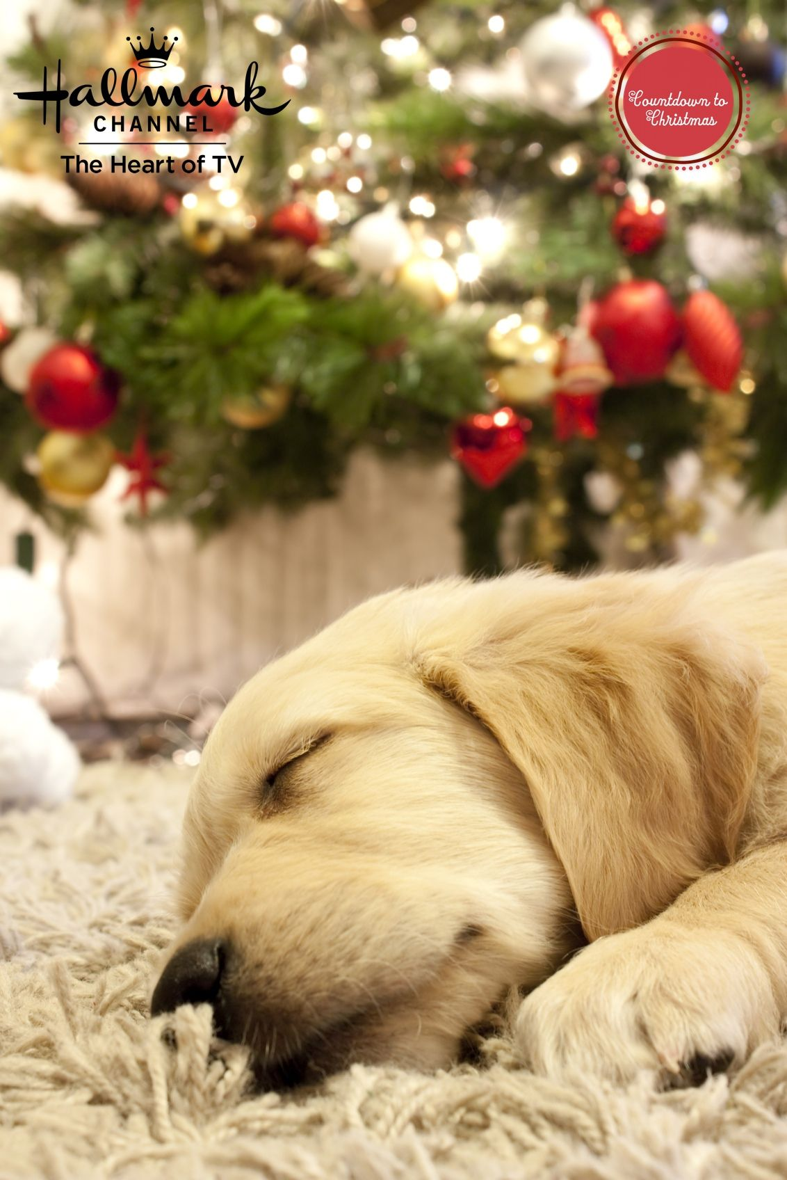 Even He S Dreaming Of White Christmas Countdowntochristmas