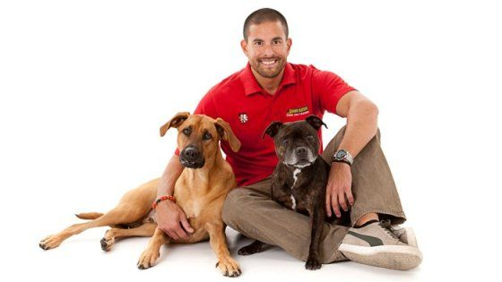 Long Island Dog Training For The Best Dog Trainer In Long