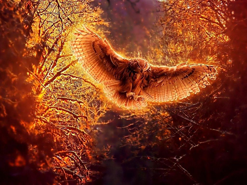 Owl In Flight At Night Owl Wallpaper Bird Wallpaper Photo Manipulation