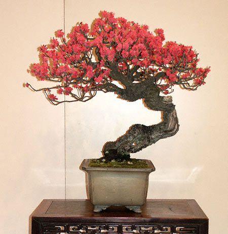 Past Tours Bonsai Flower Bonsai Art Japanese Bonsai