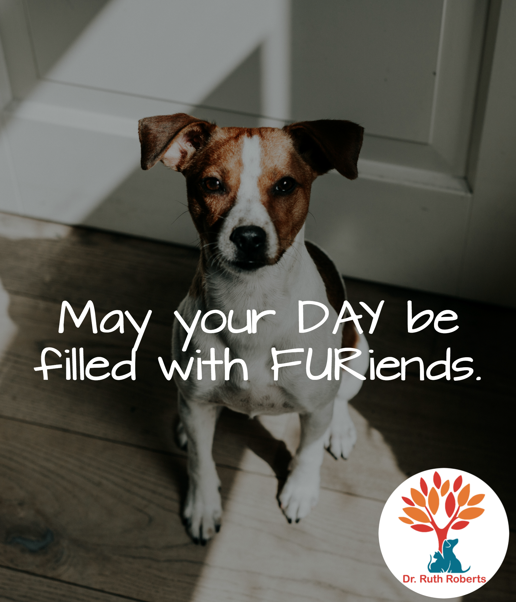 May your day be filled with FURiends. goodmorning dog