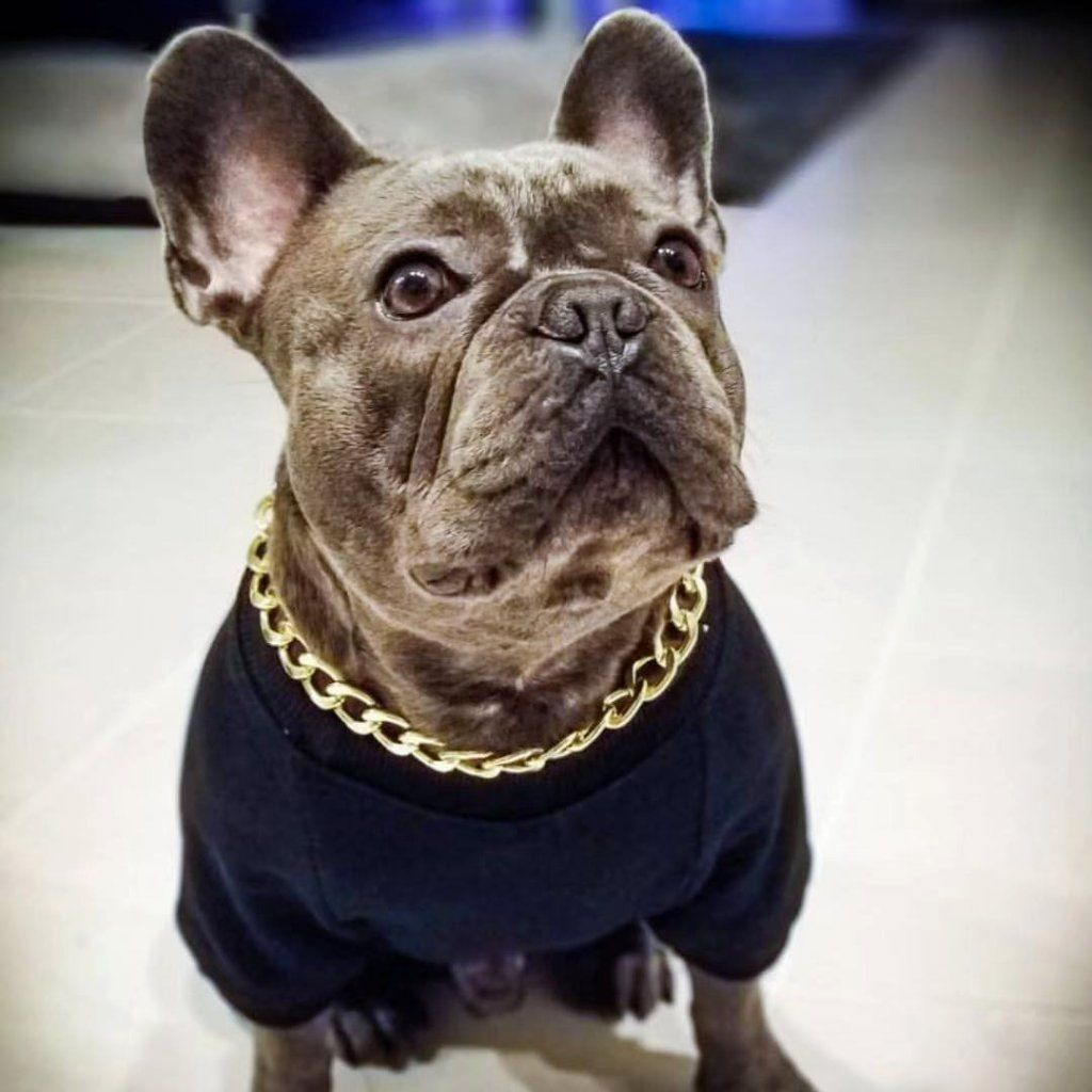 Cuban Link 20mm Dog Gold Chain French Bulldog White French