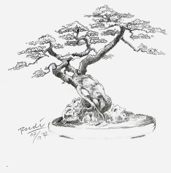 Bonsai 193 Rboles Bonsai And Tatuajes De 225 Rbol On Pinterest Bonsai Tree Tattoos Japanese Tree Tree Drawing