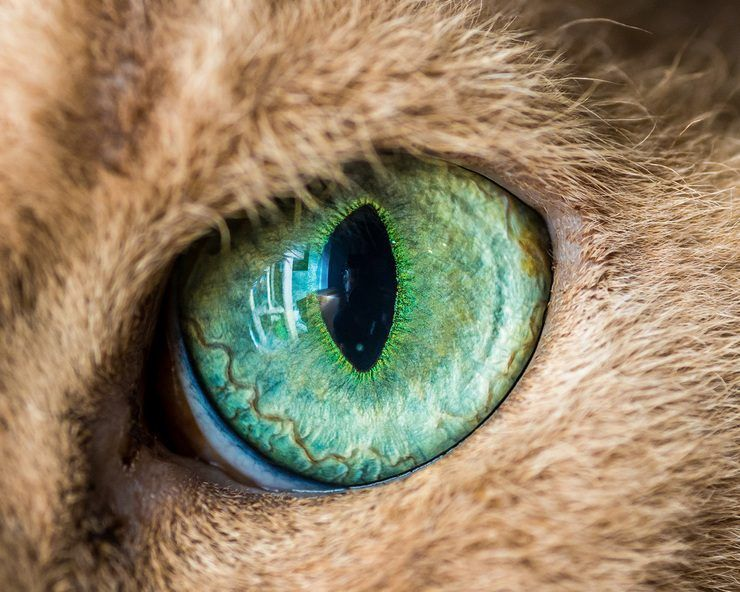 Fascinating Macro Photos of Cats' Eyes by Andrew Marttila