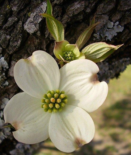 M s de 25 ideas incre bles sobre imagenes de plantas for 2 plantas ornamentales