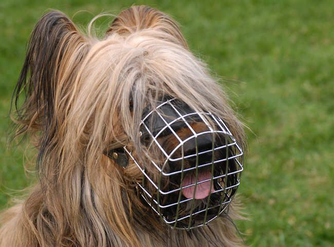 briard dog photo | Muzzle,Basket Dog Muzzle For Briard [Wire Basket Dog  Muzzle