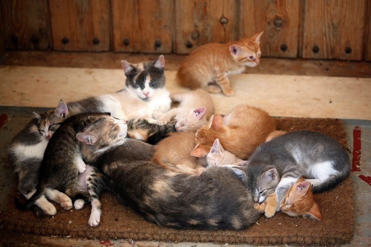 20  Best Of Group Of Kittens is Called