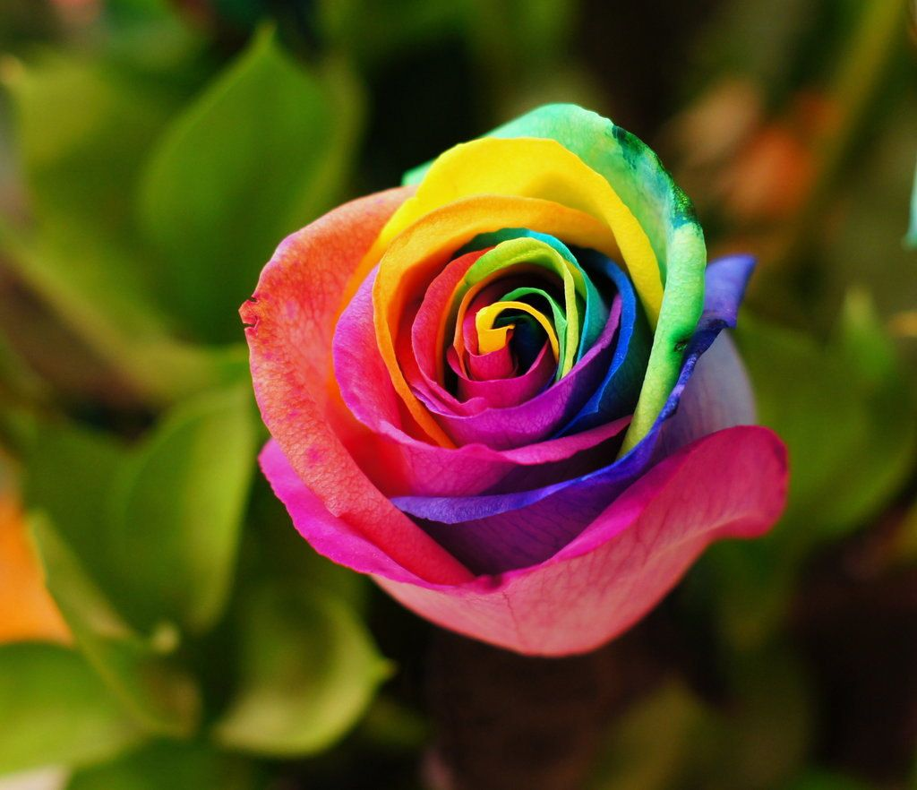 I Really Like This Garden Pinterest Colorful Flowers Seeds
