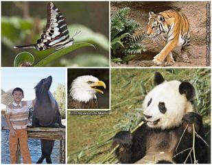1. Mariposa tropical, 2. TigredeBengala, 3. Panda gigante, 4. Pigargo oáguila decabeza blanca, 5. León marino de California