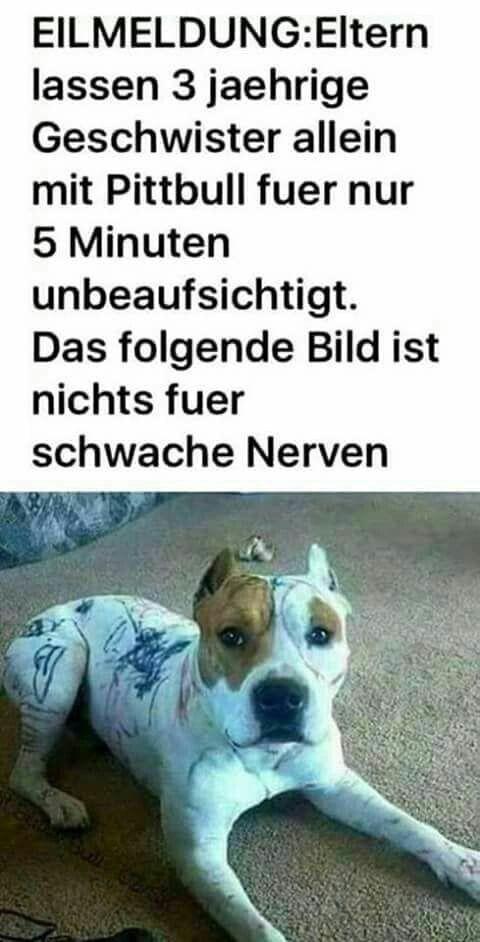Photo of Webfail #- #Fail #Bilder #und #Fail #Videos ,  #katzen #katzengif #süßekatzen