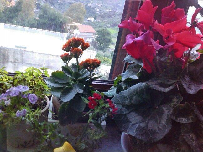 The window of my kitchen