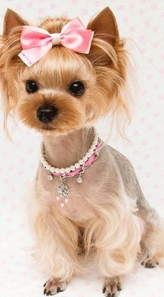Yorkie Designer Cuts With Knot Google Search Yorkie Hair Styles