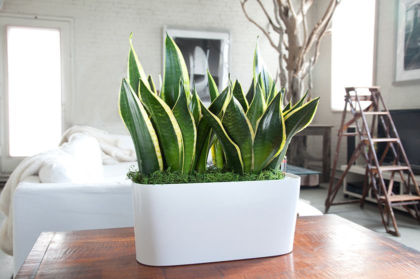 Some Plants Will Purify The Air Of Toxins Like Formaldehyde Benzene And Others