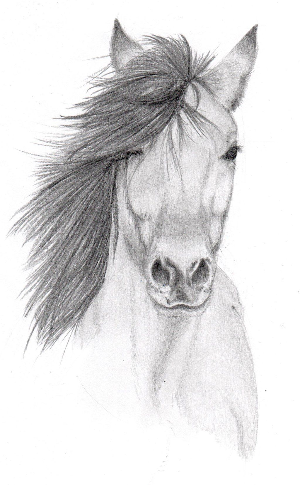 Drawing Images Animals Pencil Sketch