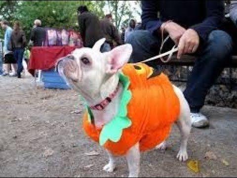 Halloween Dog Dog Parade Parade Halloween Dog Parade Dogs Nyc Dog