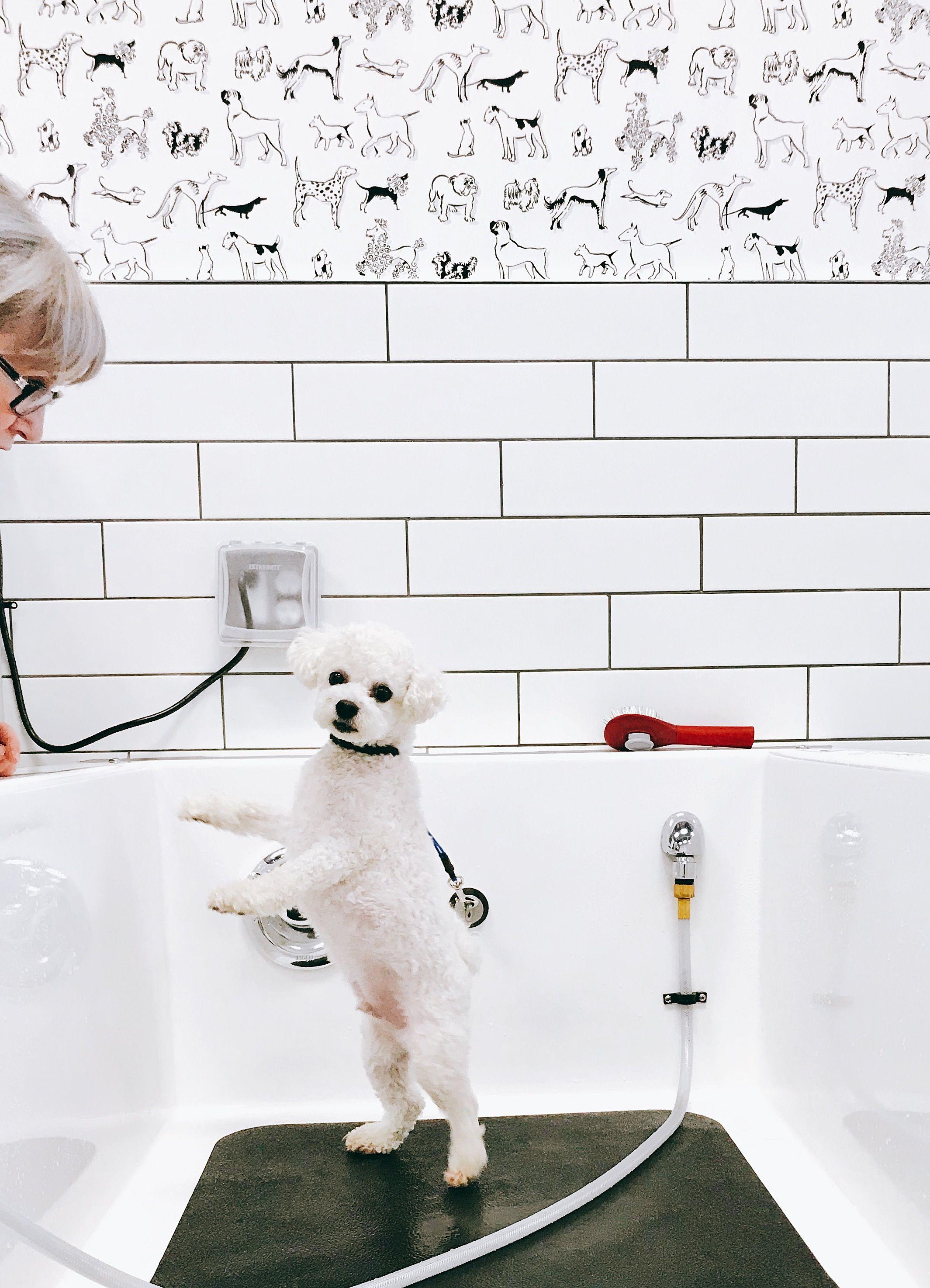 Self Service Dog Wash Dog Wash Service Dogs Dog Tub