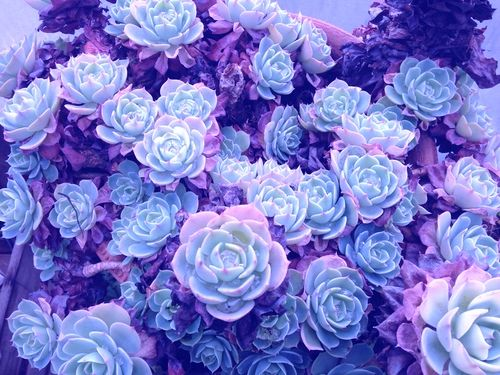Light Blue And Pink Aesthetic Oppe Digitalfuturesconsortium Org