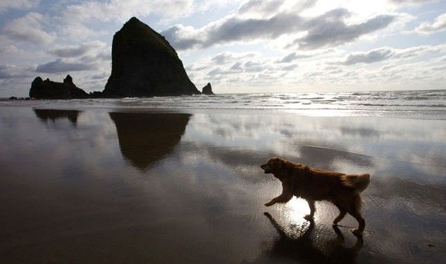 Fido Goes West The Top 5 Dog Friendly West Coast Travel Spots One