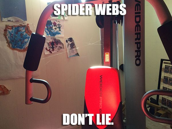 Spider Webs Never Lie Haha Spider Truth Spiders Funny