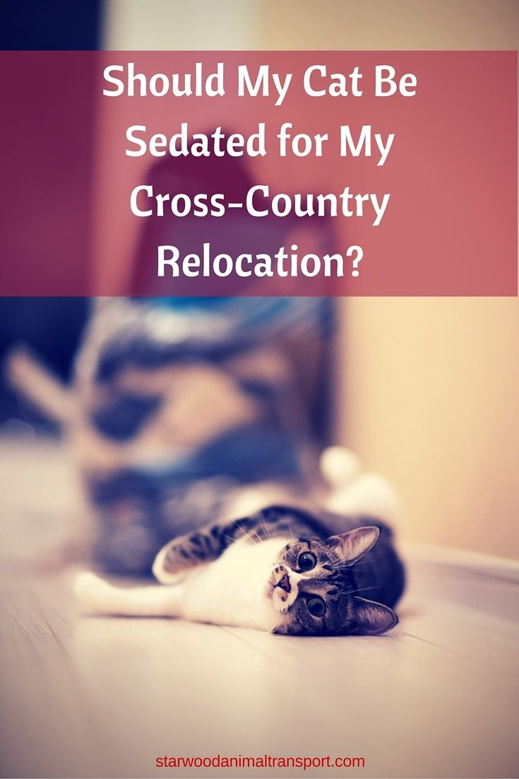 Should My Cat Be Sedated For My Cross Country Relocation Moving Cross Country Cross Country Relocation