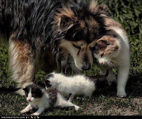Kittehs R Owr Friends: Helping Kittens