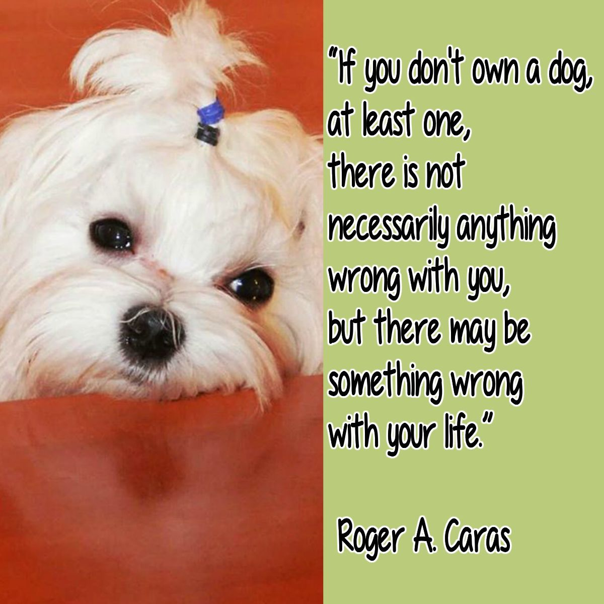 Maltese Dogs Quotes So True Cute And Funny The Dog Quotes To