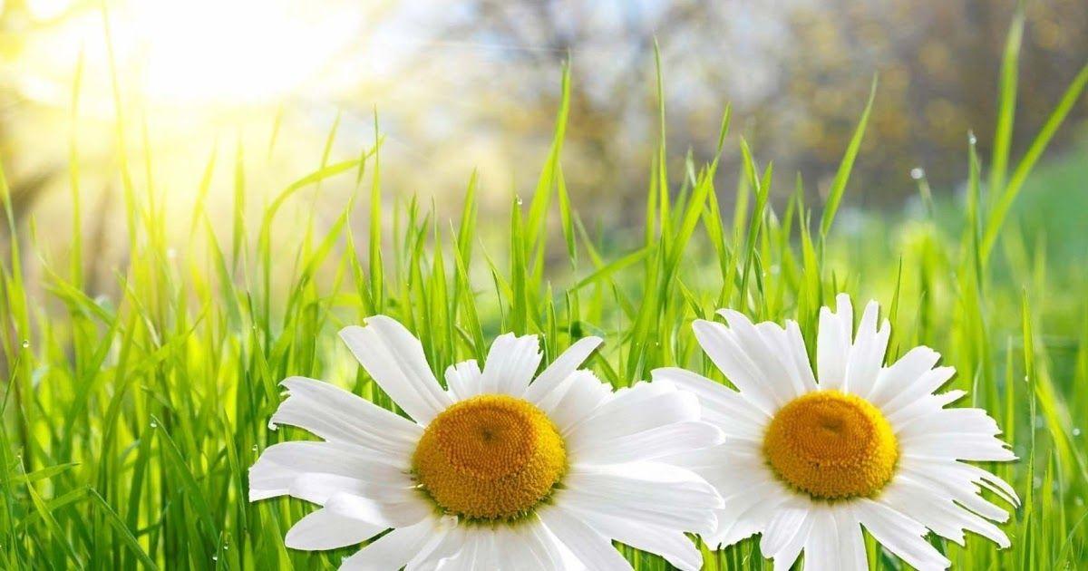 Gambar Bunga Bunga Mekar Bunga Tercantik Terindah Di Dunia Tanaman Hias Bunga Jenis Jenis Macam Macam Bunga Gambar Bunga Wallpaper Gambar Bunga Bunga Mekar