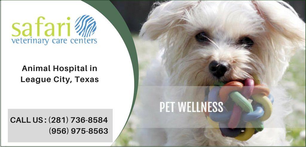 Wellness Plans & Preventive Care Pet health, Veterinary