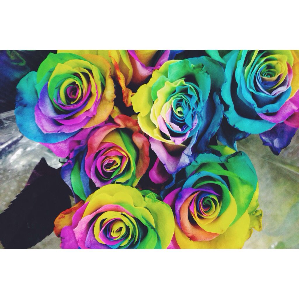 Rainbow Roses Rainbow Roses Have Finally Hit Our Shores These