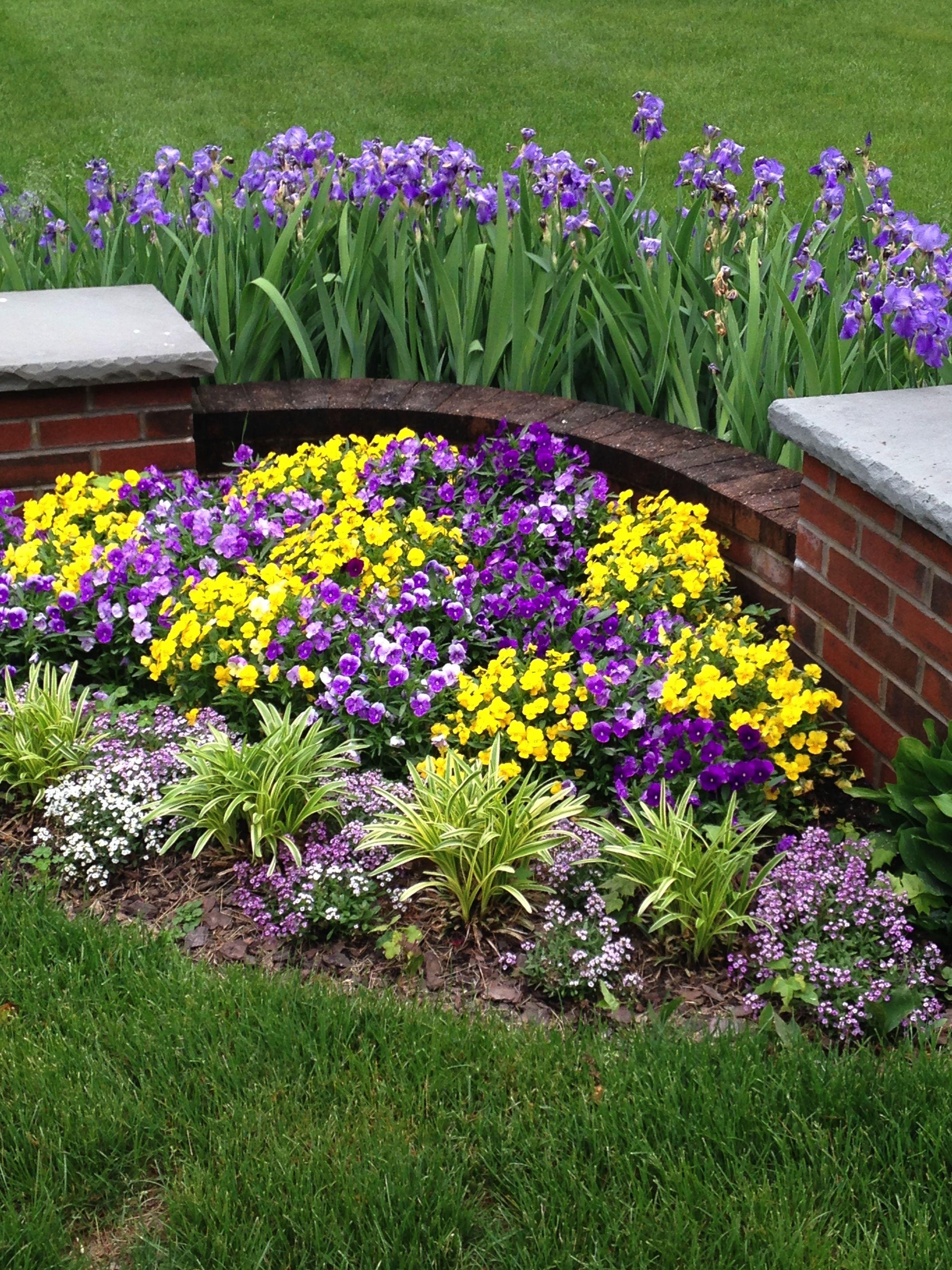 Spring Pansies And Iris Landscape Design Cottage Garden Plants Cottage Garden Design