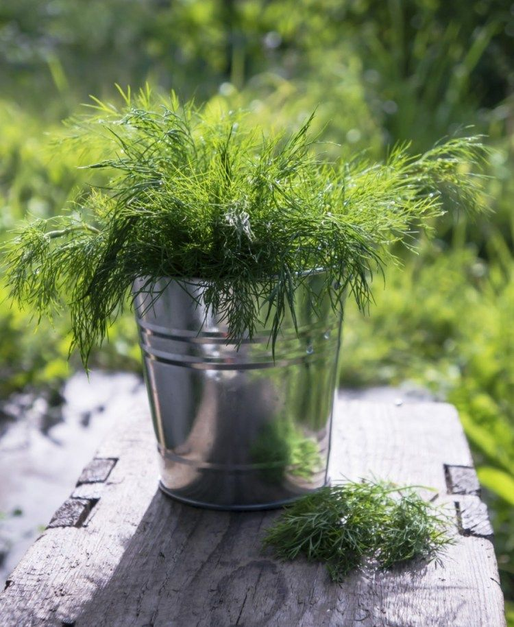 How To Plant A Small Container Herb Garden For Your