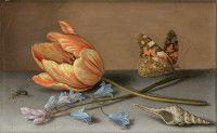 3 Balthasar van der Ast Tulpe mit Schneckenhaus und Schmetterling, Privatsammlung, Tessin, Schweiz
