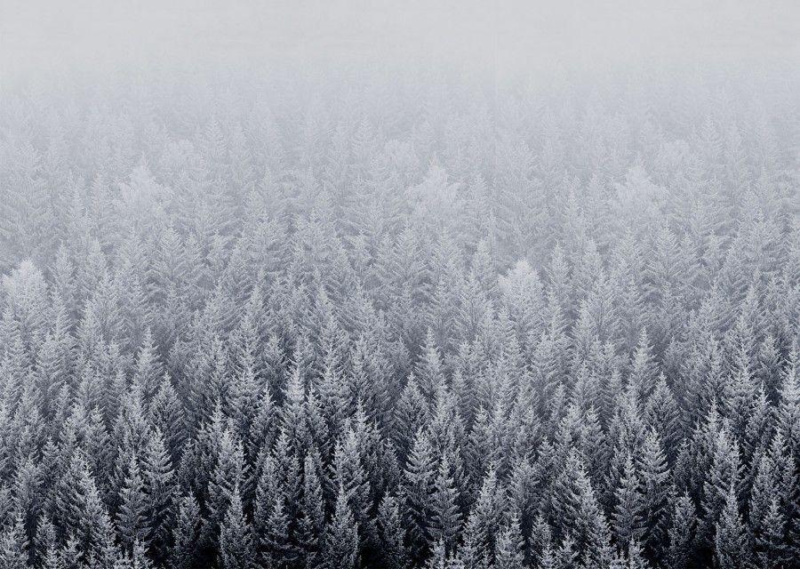 Ios 8 Snow Forest Default Mac Desktop Wallpaper Snow Forest Desktop Wallpaper Art Mac Backgrounds