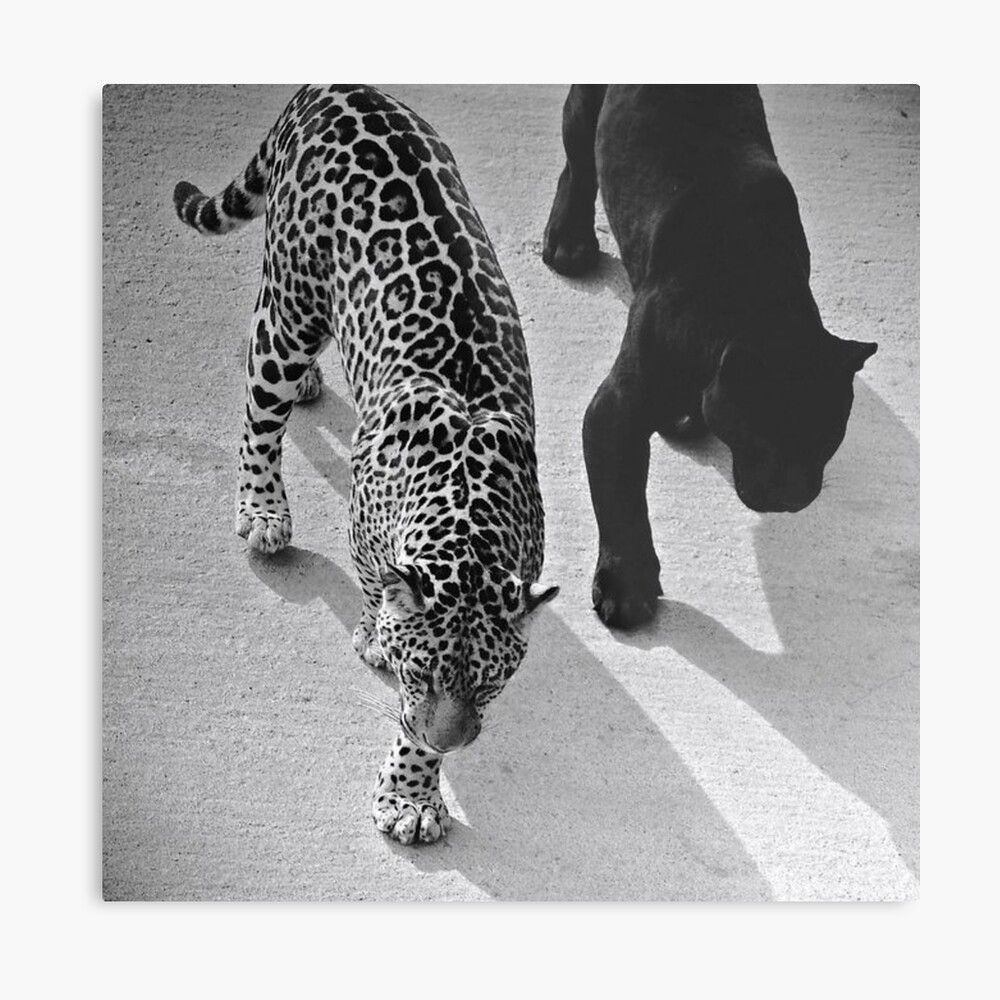 The Leopards Metal Print